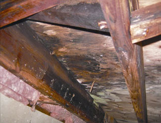 mold and rot in a Arlington crawl space